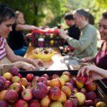 Jablkobraní v pražských sadech
