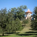 Cibulka