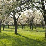 Jaro láká do sadů. Objevte známá i neznámá zákoutí pražských sadů.