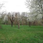 Třešňový sad Hájecká