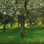 Po stopách kvetoucích stromů a jedlých květin