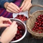Degustační procházka sadem za starými odrůdami třešní a tipy na jejich zpracování / 20.6.2021